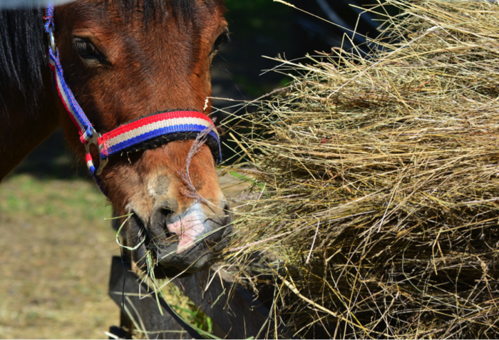 How to feed your horse well? Our advice to manage a stable horse
