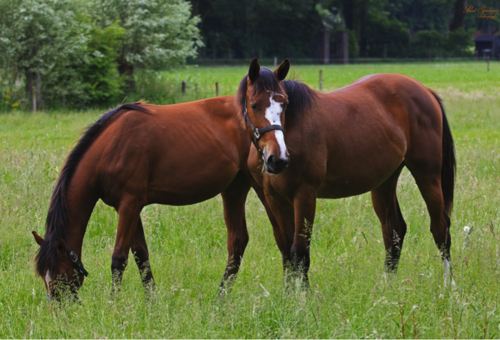 Specific care to provide to your horse at the end of winter