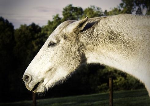 Unhappy horse