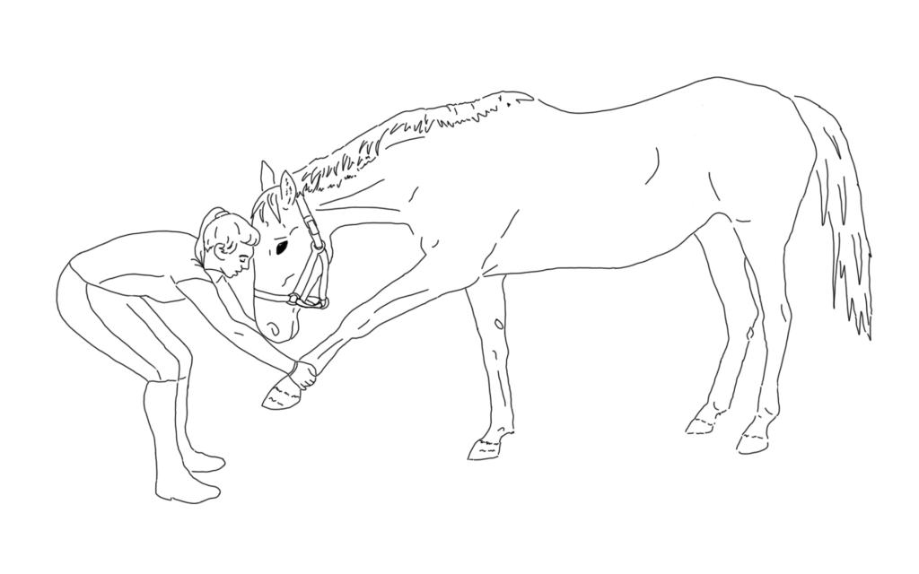 L'étirement de l'épaule : anticiper la chapîne lésionnelle chez le cheval.