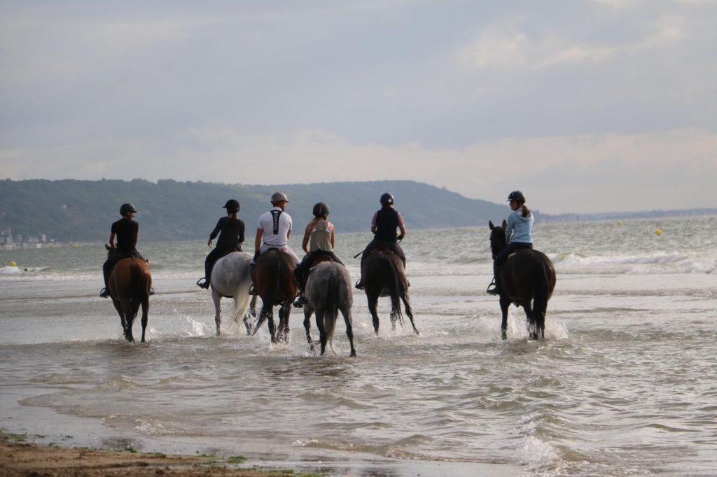 Organiser une promenade avec plusieurs chevaux d'une même écurie peut être une bonne idée de sortie !