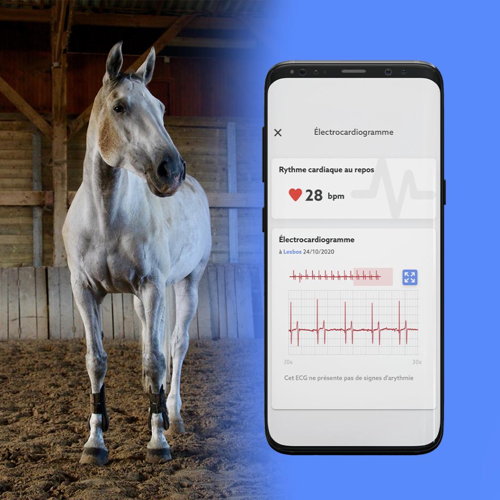 Obtenez l'ECG de votre cheval grâce à CEEFIT Pulse & ECG et au programme Santé+.