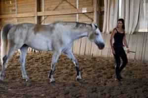 l'entrainement du cheval permet de le mettre en confiance et assure une bonne santé mentale et condition physisque