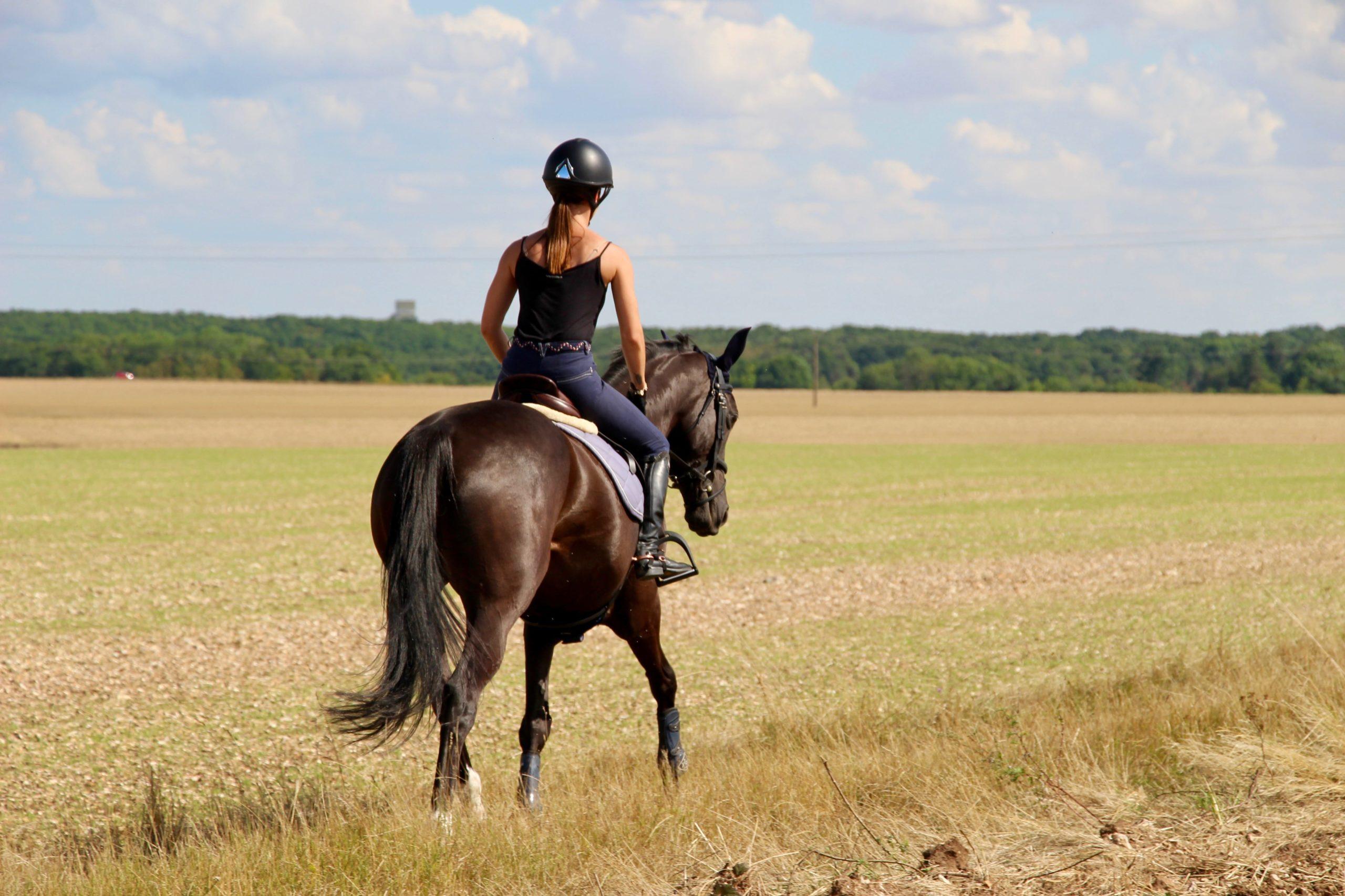 Equitation - hightech - innovation