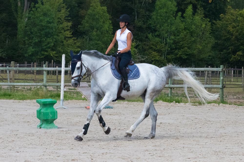 Equitation - cavalier - cheval